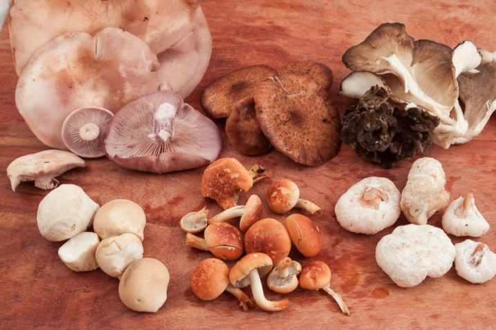 Clockwise from top left Blewits, Honey mushrooms, Hen of the woods, Aborted entoloma, Brick top, Pear shaped puffballs.