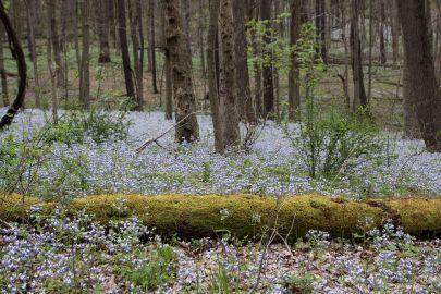 Braddocks Trail Park-5. By Richard Jacob