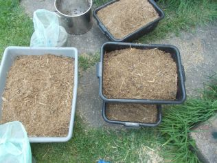 Put spawn mixture in growing containers.