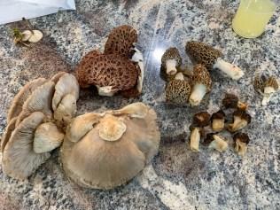 Spring mushrooms. By Richard Jacob