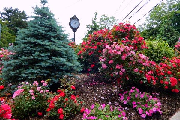 Amodio Memorial Garden