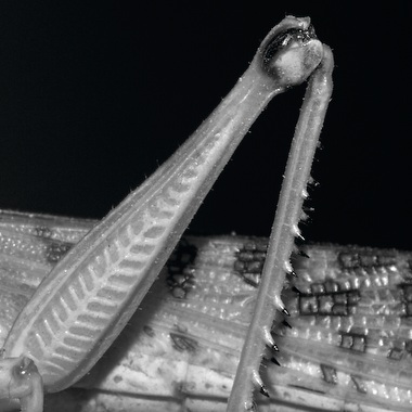 Macroaufnahme