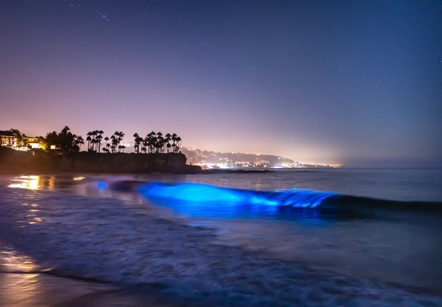 The neon glowing waves are back — and this photographer knows just where to find them