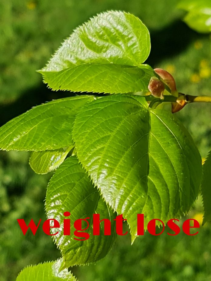 Best practices on weight loss without dieting