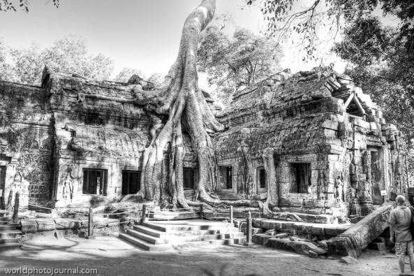 ta phrom tree on temple - b&w
