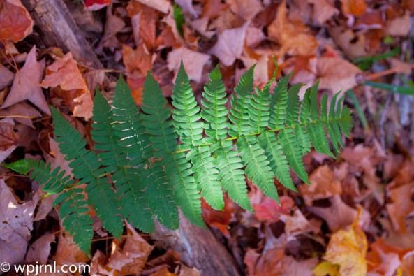 Ontario Fall 2011 - Dorset