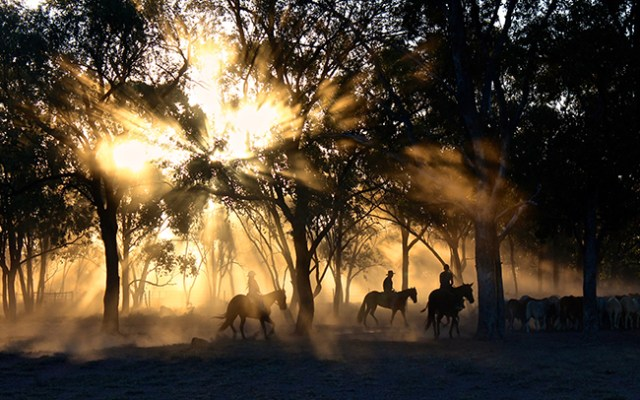 three people riding horses with sun shining through the tree