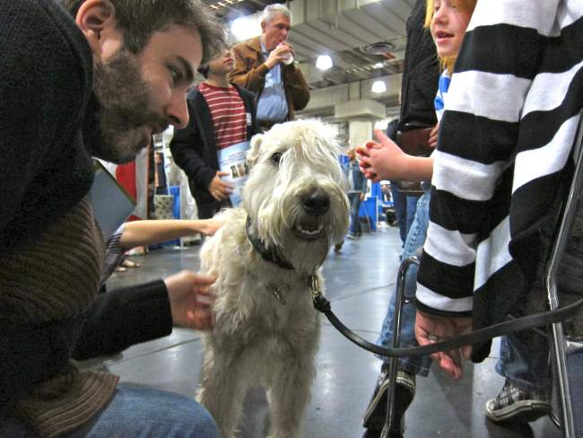 The Wheaten Terrier - Grooming and Care