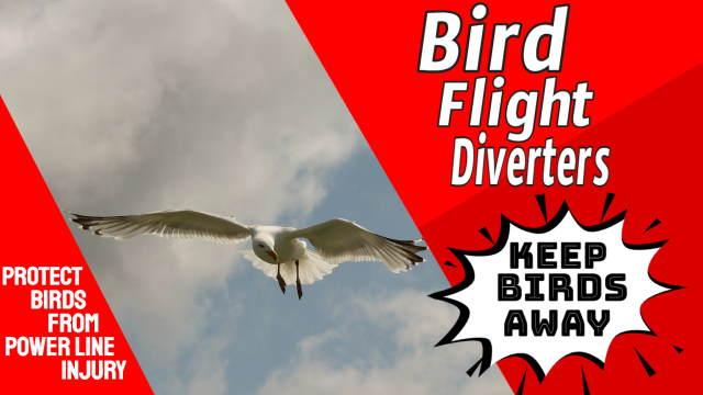 Bird flight diversion is kind to birds.