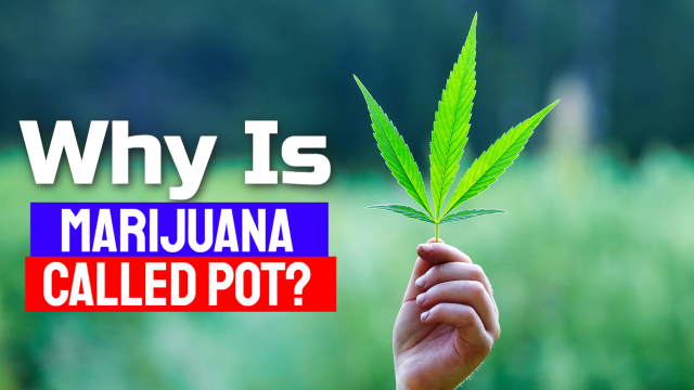 Why is marijuana called pot is illustrated with this image of a hemp leaf.
