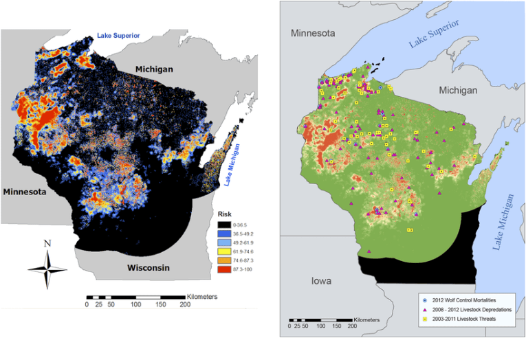 Researchers   Risk Map  Helps Predict Wolf Attacks On Wisconsin     Researchers   Risk Map  Helps Predict Wolf Attacks On Wisconsin Livestock