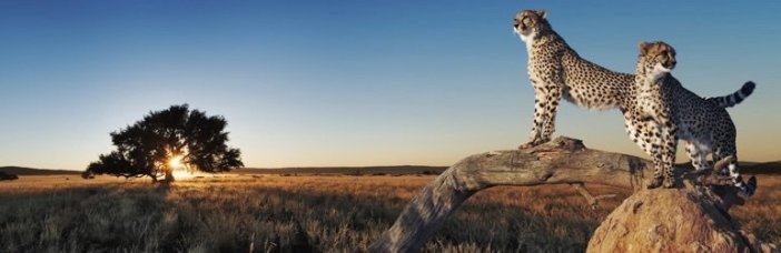 WP Fastest Cache , Caching plugin, WordPress Plugin