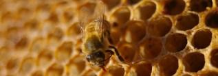 Honey Beehive Design