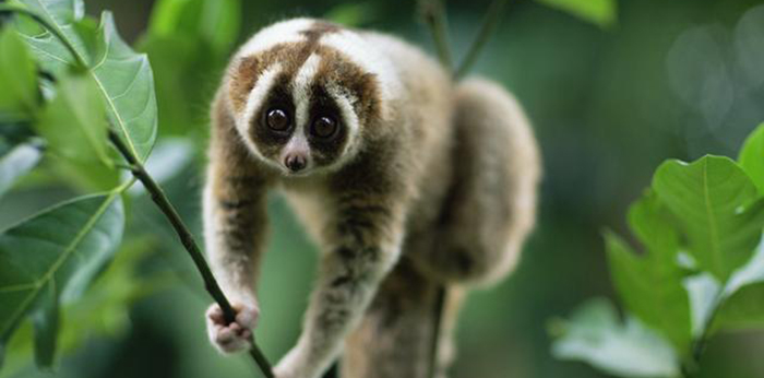 Recent Pressable Outages the Result of a Slow Loris Attack