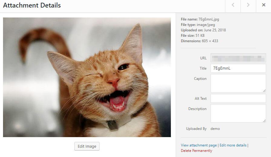 Editing a WordPress image.