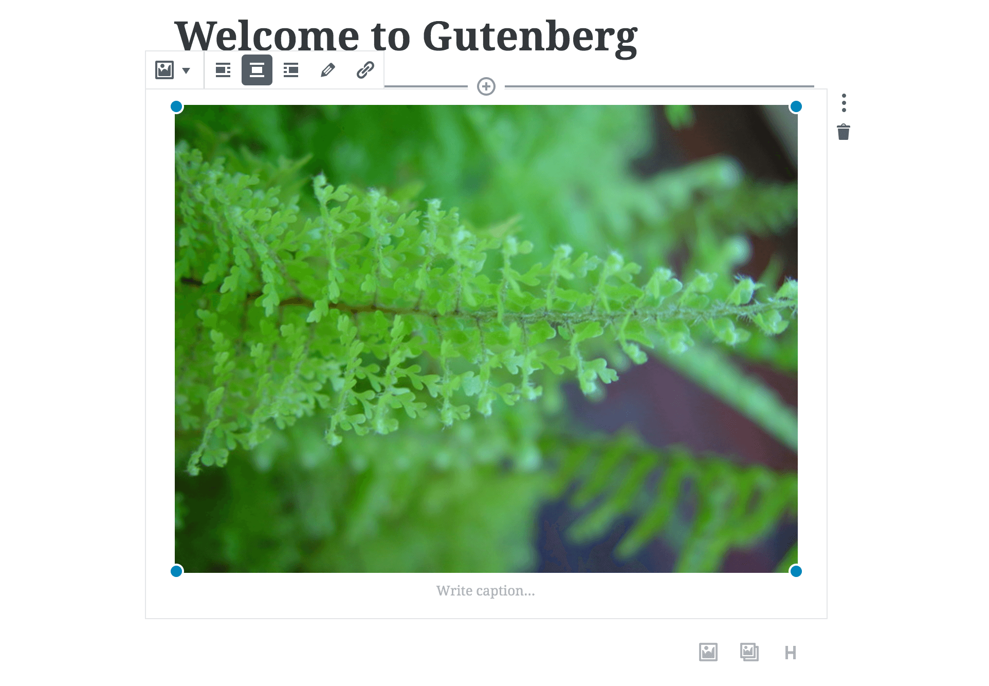 An image block in Gutenberg.
