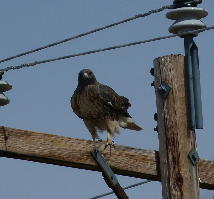 We have seen a lot of wild life, plenty of eagles