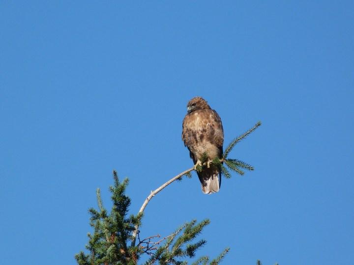 There were plenty of eagles around