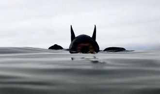 Batman hood at Old Garden Beach