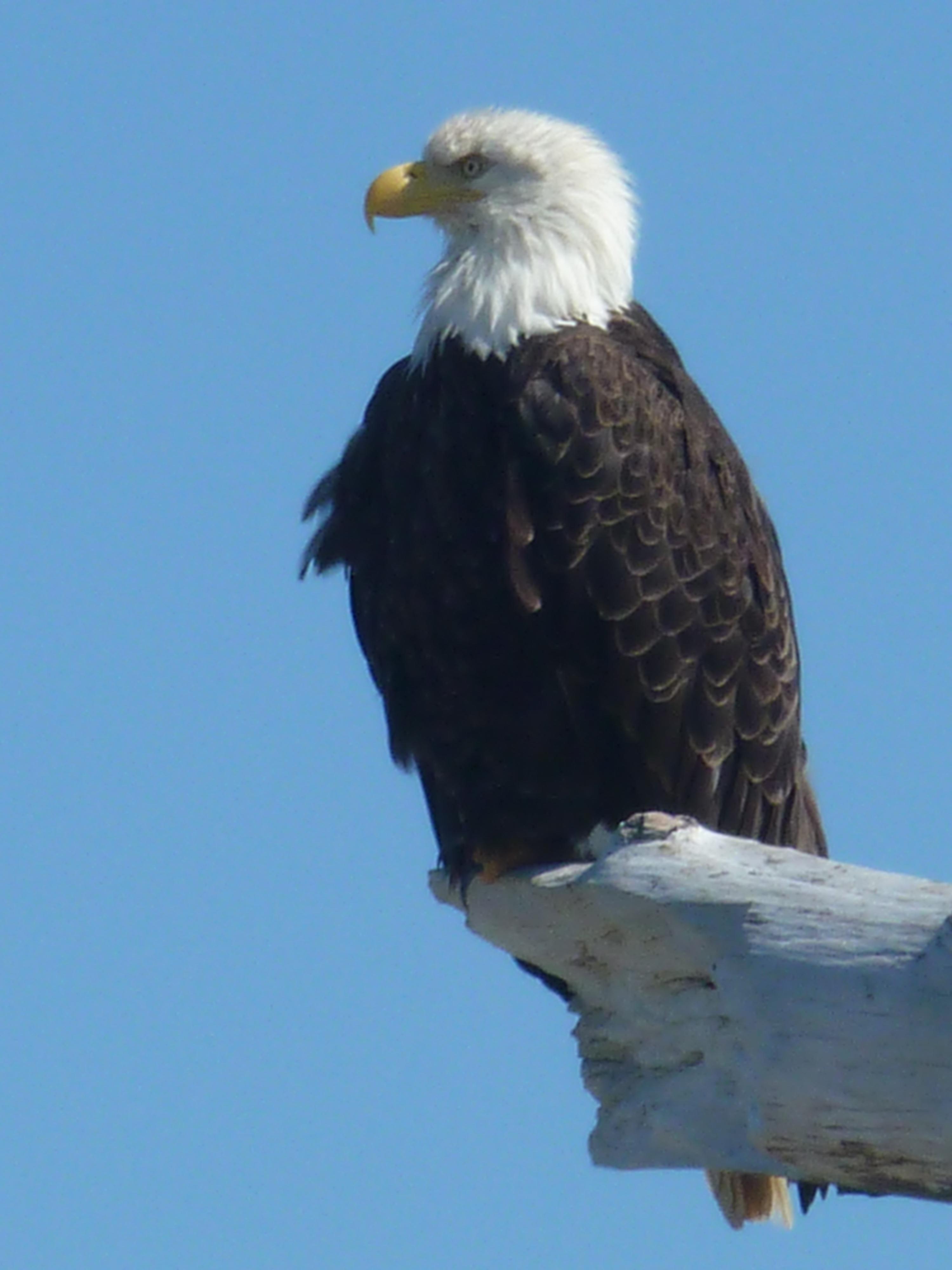 Cheap Write My Essay Eagle Metaphor