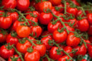 N.C. tomato growers plan referendum in March