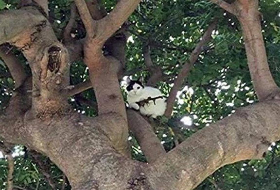 Police in Oregon Get a Call About a Cat With an Assault Rifle in a Tree