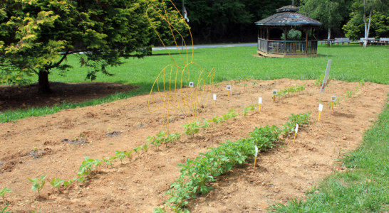 NC State Extension, 4-H students grow learning garden at SCC's Swain Center