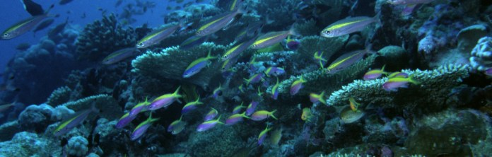 Ocean Wri Indonesia