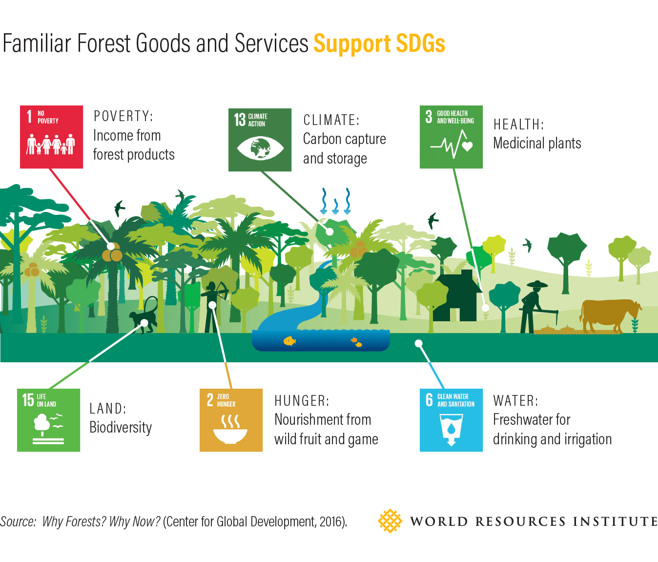Forests And Sdgs Taking A Second Look