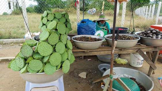 Lotus seeds and snails