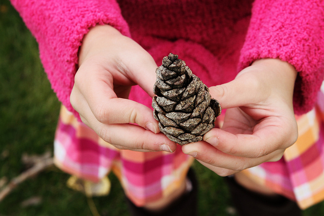 Image, child's hands holding a pinecone.