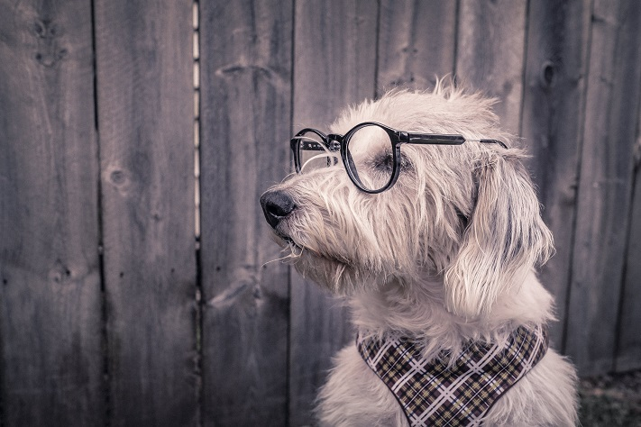 Image, dog with glasses.