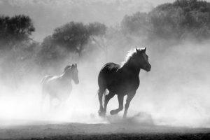 Image, wild horses.