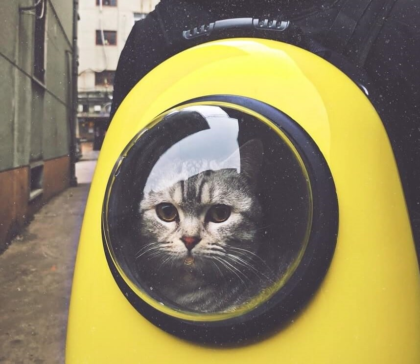 Image, grey cat in a yellow backpack-style cat carrier