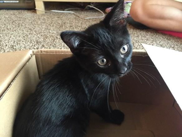 Edgar Allen Purr, kitten