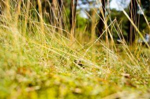 grass-932779_1280