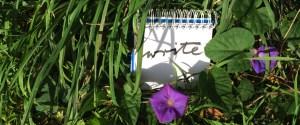 Write! One word among the morning glory.