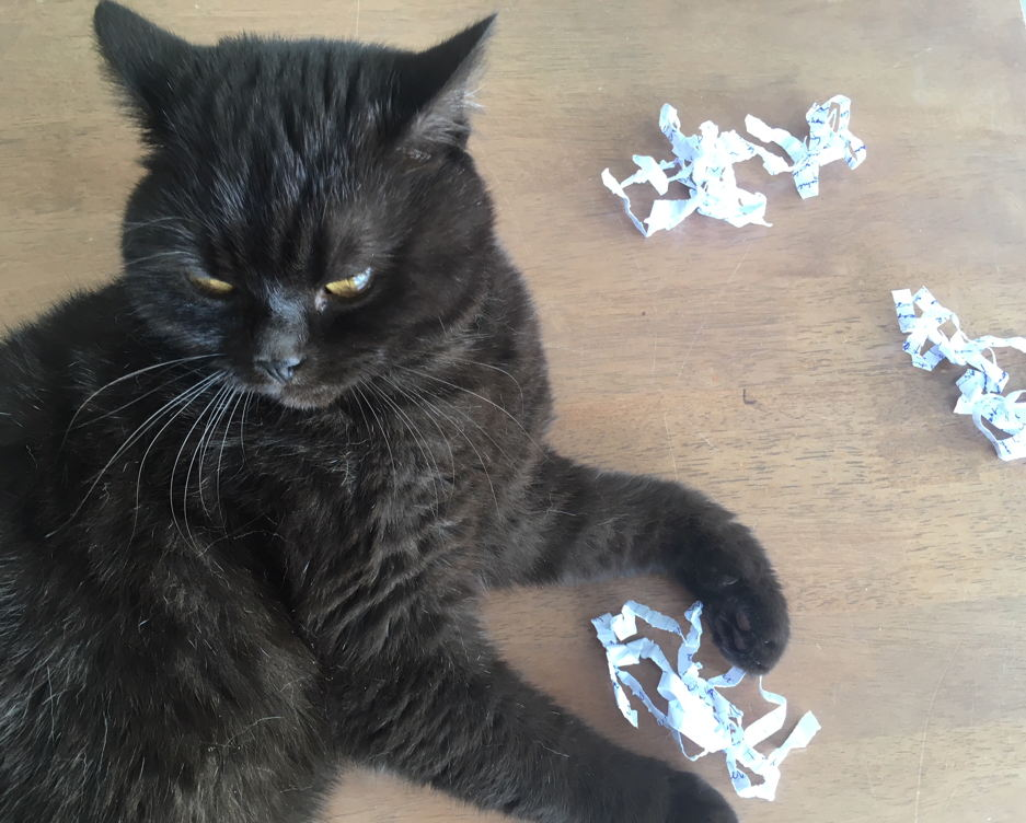 Cat playing with shredded paper
