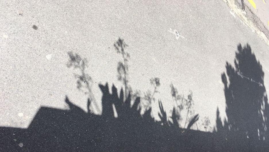 shadow-plants