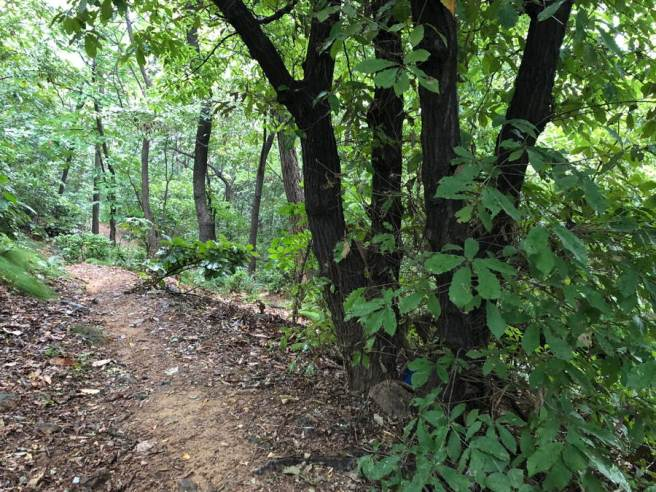 Hilly walkway through forest