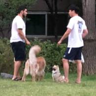 Dog meet big dog
