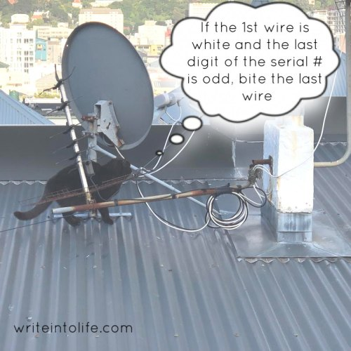 Cat disarming a rooftop bomb. If the first wire is white...