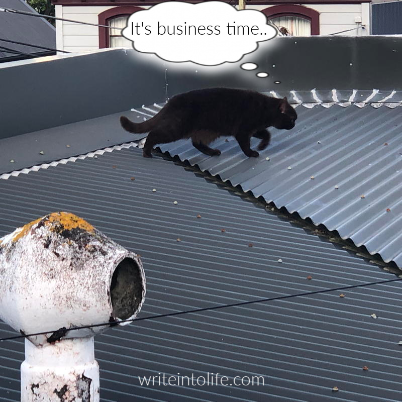 Cat striding rooftop with grim intent. Thinks: It's business time.