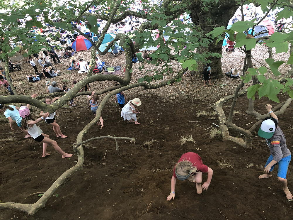 Photo of many children playing on and under a huge tree.