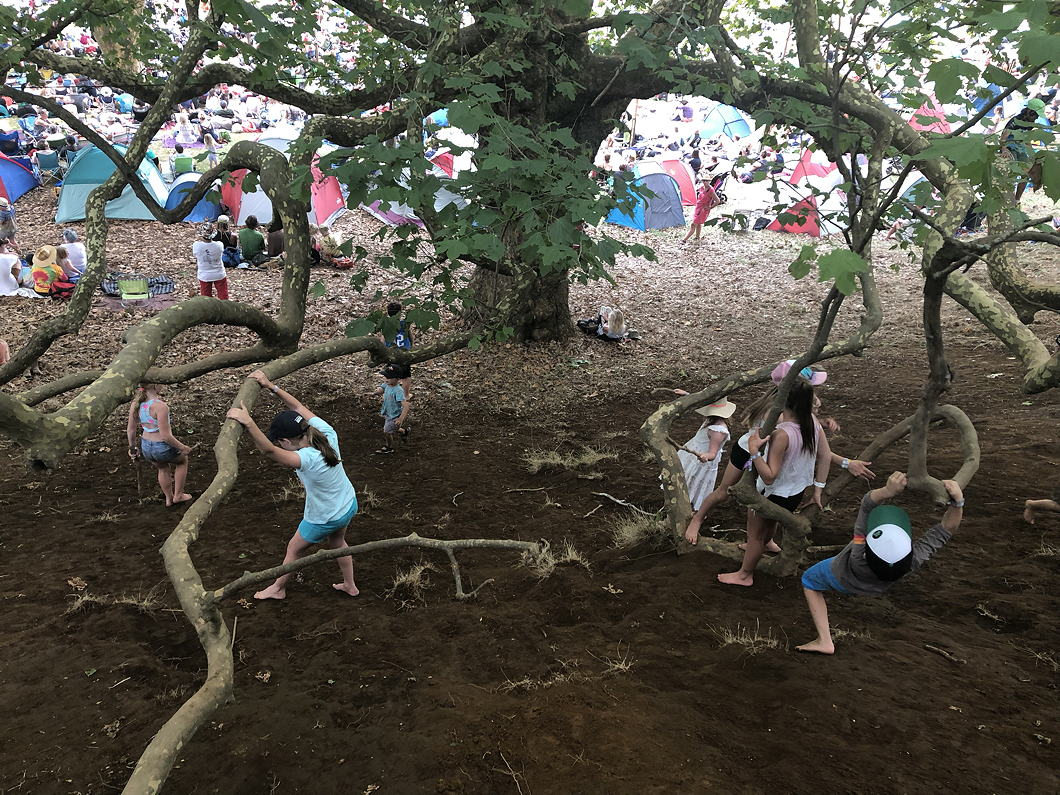Children playing in a giant tree at WOMAD NZ 2018.