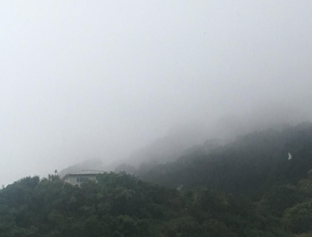 Fog on a hill