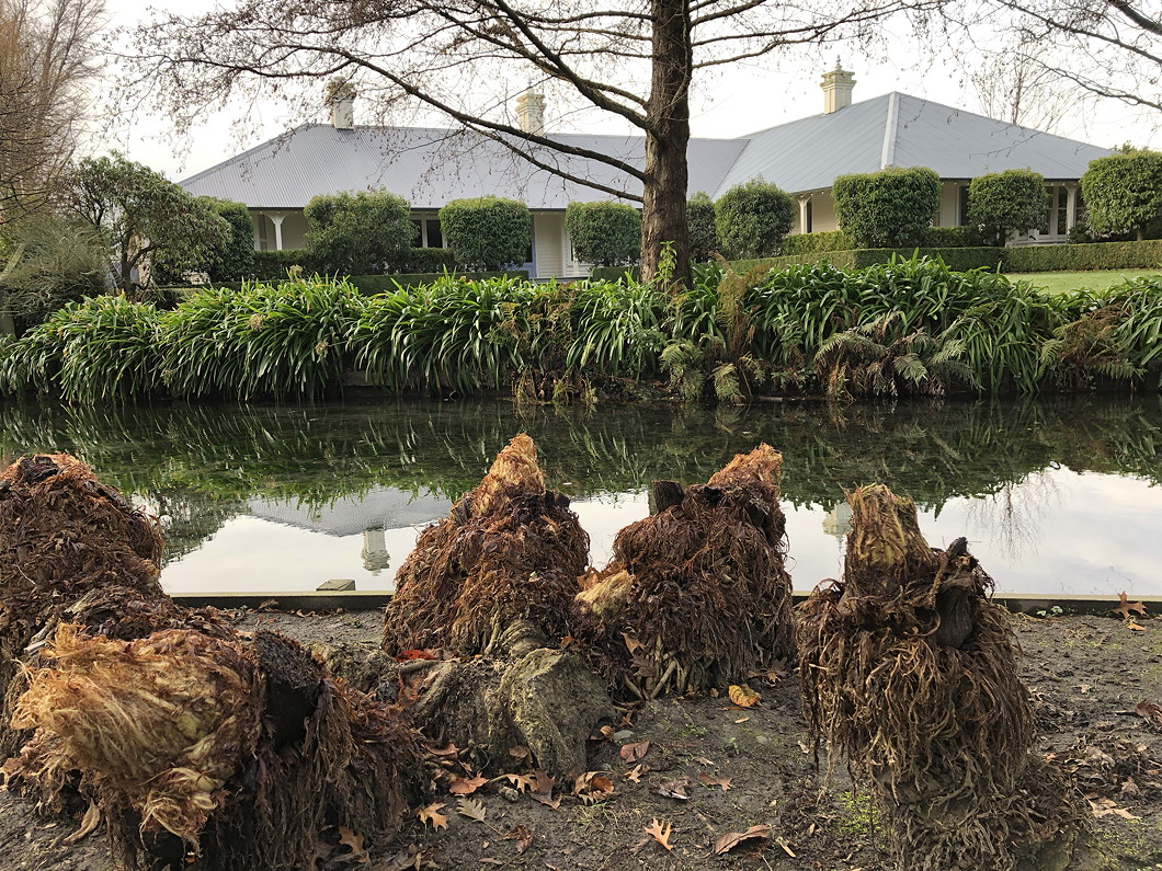 Photo of gunnera plants in winter looking a bit like people in long brown cloaks.