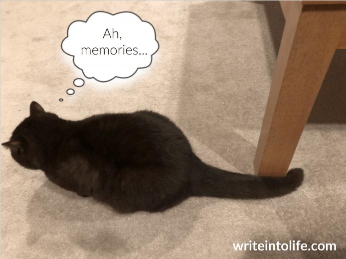 Cat gazes at carpet. Think bubble says, Ah, memories...