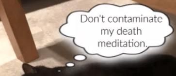 Cat thinks, Don't contaminate my death meditation
