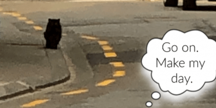 Go on. Make my day. Cat on road playing chicken.